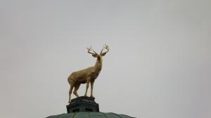 Hirsch - Symbol und Wappentier